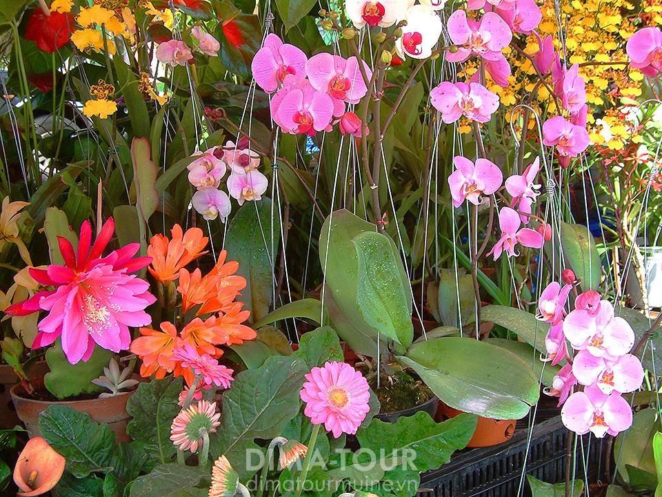 Flowers in Da Lat, Vietnam