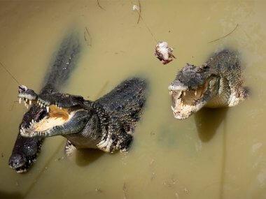 Tour from Mui Ne Vietnam 3 in 1: Reclining Buddha, mineral springs Binh Chau, crocodile farm