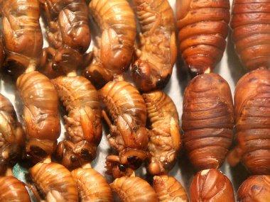 Vietnam photo gallery: Food